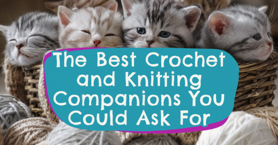 The Best Crochet and Knitting Companions You Could Ask For