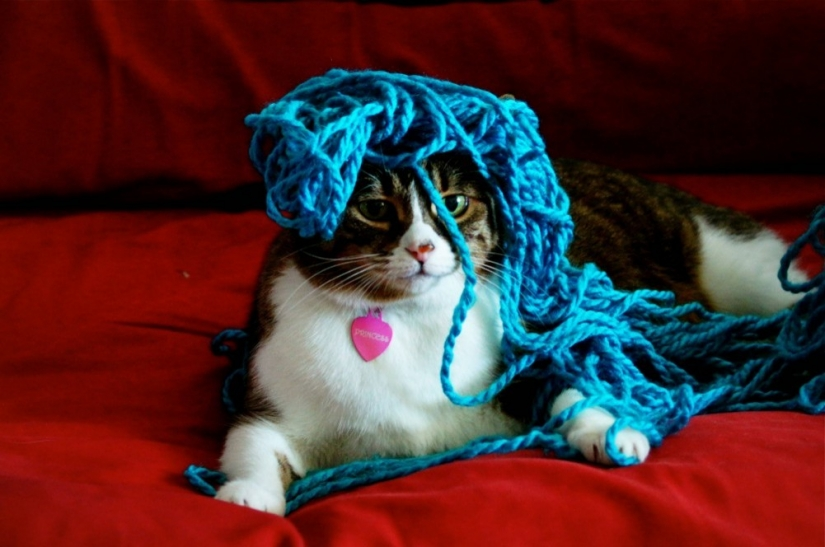 21 Cats Ambushing Your Yarn