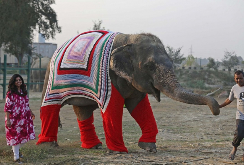 CUTE ALERT: VILLAGERS KNIT JUMPERS FOR ELEPHANTS