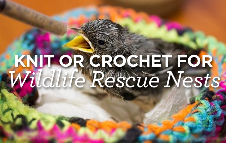 Knit or Crochet for Wildlife Rescue Nests