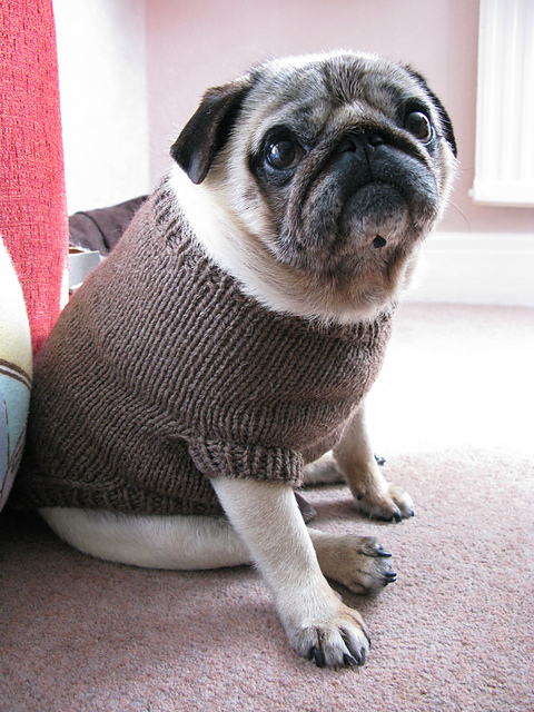 11 Patterns For People Who Love Pugs Top Crochet Patterns Blog